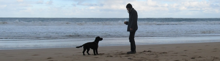 person with dog at beach