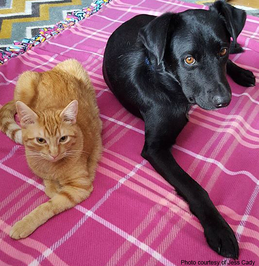 multi-animal household: cat and dog sharing a blanket