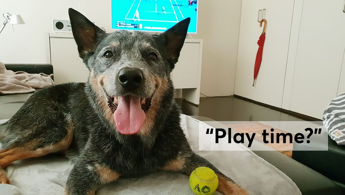 Take a Break and Play: DIY Dog Training Made Easy