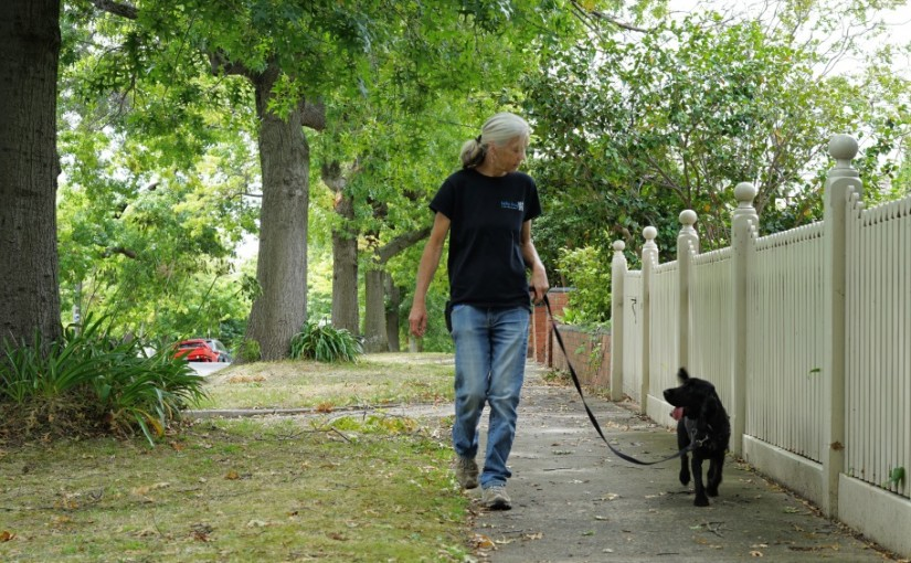 Walking on leash: How to be in sync with your dog