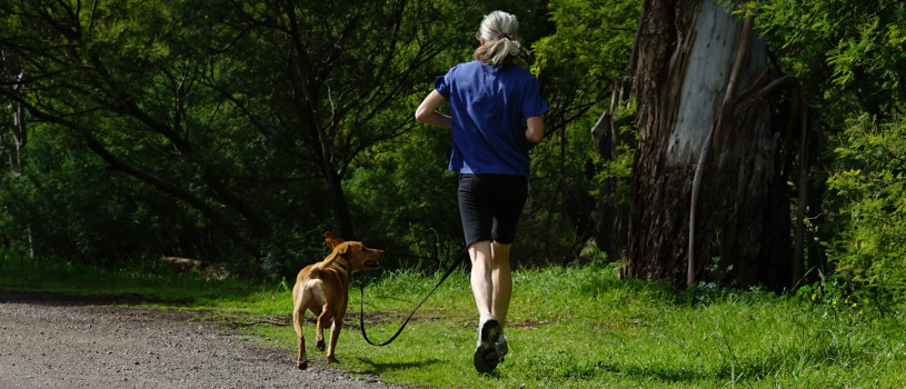 Dog and human running on lead