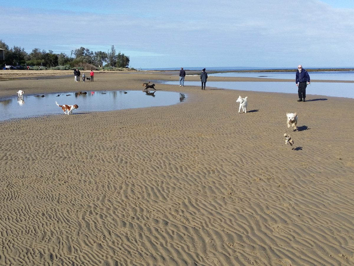 Dogs and People at Ricketts Point Beach