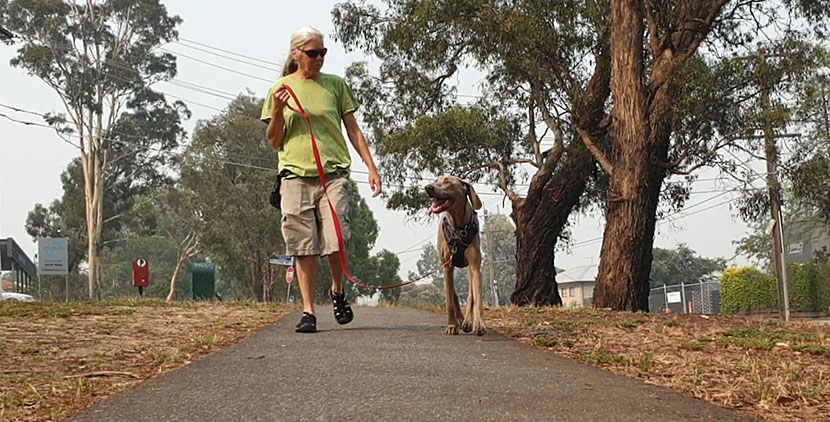 Walking With Your Dog And Loving It: A Teamwork Approach